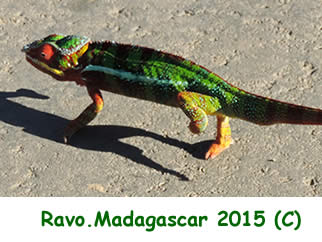 Madagascar, a wonderland for nature lovers and for trekking lovers, Photo Ravo.Madagascar